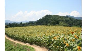 長野県阿南町のふるさと納税|申請方法